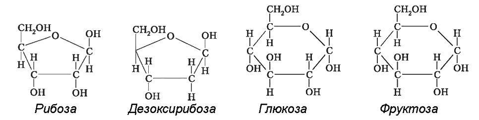 Рибоза, Дезоксирибоза, Глюкоза, Фруктоза