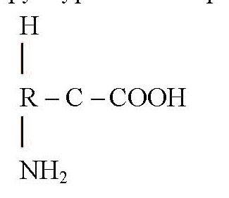 Схема будови молекули амінокислоти